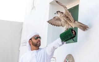 الصورة: «الصيرمي».. بطل دوري الإمارات للصيد بالصقور