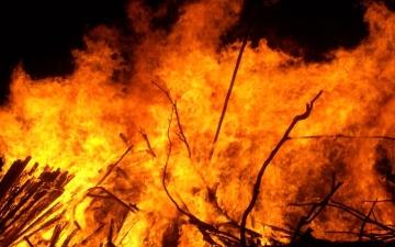 الصورة: قضى حاجته فأحرق غابة في ألمانيا !