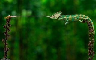 الصورة: بالصور: الحياة بالأخضر