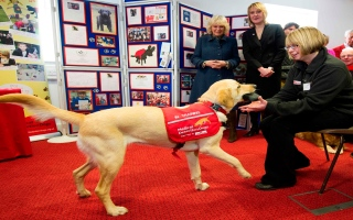 """الصورة: هل تنقذ الكلاب الإنسان من """"كورونا""""؟.. مؤسسة بريطانية تجيب"""