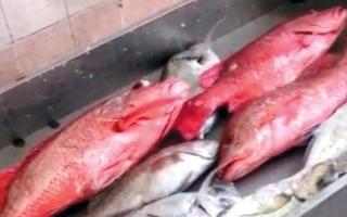 الصورة: بالفيديو: ارتفاع أسعار الأسماك في «الشرقية» بنسبة تصل إلى 120%