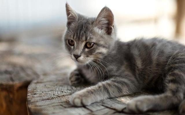 الصورة: ووهان مرة أخرى: 15% من القطط لم تسلم من كورونا