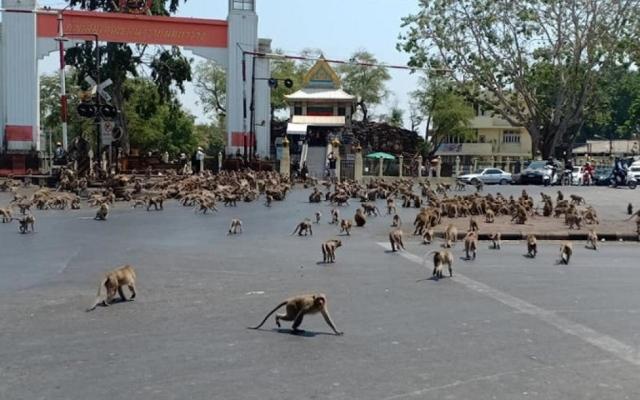 الصورة: بالصور..حيوانات برية تغزو شوارع مدن في الحجر الصحي