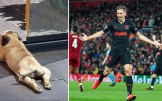 """نجم أتلتيكو مدريد يواصل استفزازه لجماهير """"ليفربول"""" ويطلق اسم """"إنفيلد"""" على كلبه"""