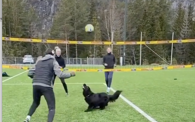 """الصورة: بالفيديو.. مباراة كرة طائرة صانع ألعابها """"كلب"""""""