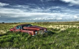 الصورة: غابات خضراء وسيارات مهجورة