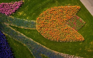 الصورة: 7 ملايين زهرة.. حديقة الربيع الأكثر جمالاً في العالم