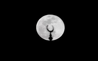 الصورة: بالصور.. القمر العملاق في سماء الإمارات