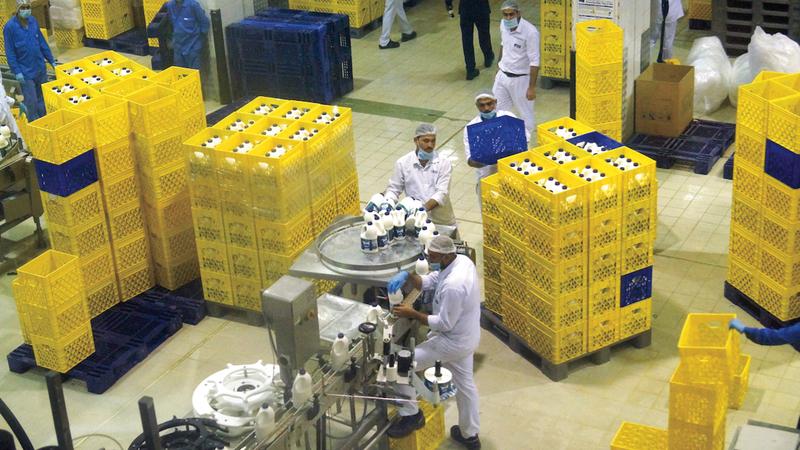 صناعة منتجات الألبان ومشتقاتها من الصناعات الغذائية المهمة ولها تاريخ طويل في الدولة. أرشيفية