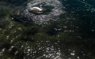 """الصورة: بالصور.. """"كورونا"""" يجعل نهر السين الفرنسي أكثر نقاء وهدوءا"""