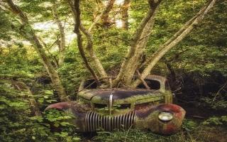 الصورة: بالصور.. سيارات مهجورة تضيف جمالية إلى الطبيعة
