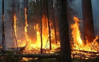 """الصورة: كاليفورنيا تكافح حرائق الغابات بـ""""الماعز """""""