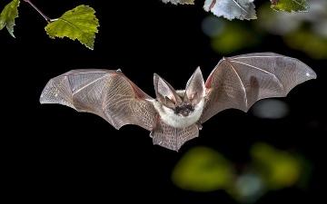 الصورة: خفاش في مقصورة الركاب يجبر طائرة هندية على العودة لنيودلهي