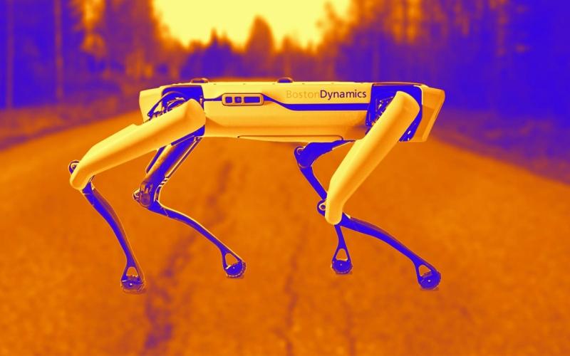 """الصورة: بالفيديو: """"سبوت"""".. روبوت لرعي الأغنام في نيوزيلاندا"""