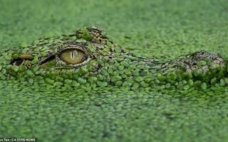 الصورة: بالصور.. فن التخفي