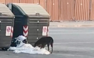 الصورة: لقطة.. كلاب ضالة