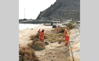 الصورة: بلدية دبا الفجيرة تزيل 3 أطنان نفايات تهدد الثروة السمكية