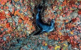 """الصورة: بالصور.. عالم """"كلب البحر"""" في مياه البحار"""