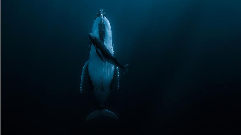 لقطة ياسمين لـ«عناق» الحوت الصغير وأمه اقتنصت الجائزة الكبرى. من المصدر