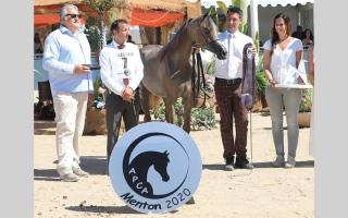 الصورة: مربط دبي للخيول ينال لقب أفضل مربى في «منتون الدولية 2020»