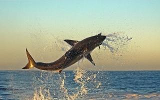 الصورة: بالصور.. عالم أسماك القرش المذهل