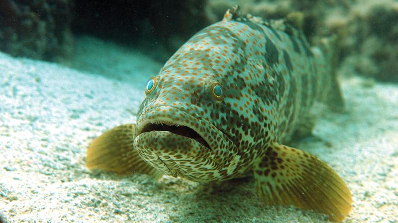 الهيئة تراقب المخزون السمكي وفقاً لمؤشرات الاستدامة.   من المصدر