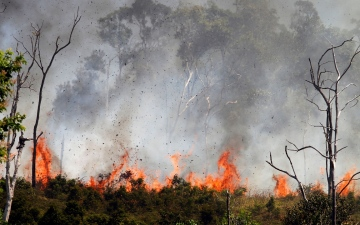 الصورة: الرئيس الجزائري يأمر بالتحقيق في تزايد الحرائق