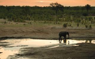 الصورة: زيمبابوي تدرب «الجنس اللطيف» للحفاظ على الحياة البرية