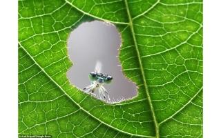 الصورة: بالصور.. عالم الحشرات المذهل