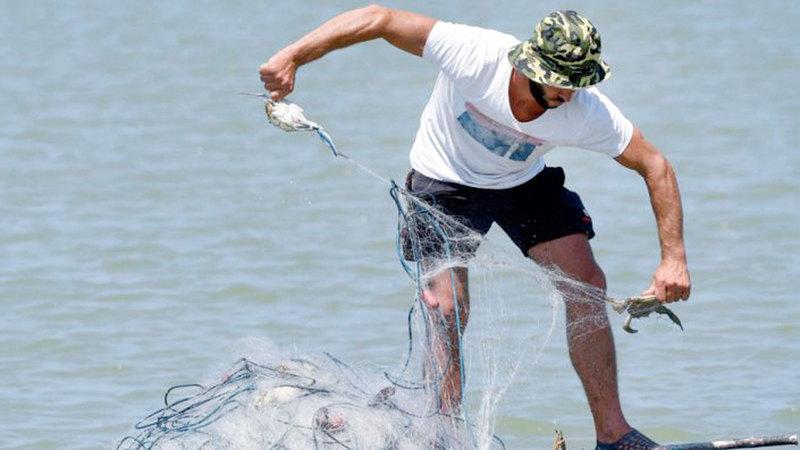 الصيادون قلقون بسبب الزيادة الكبيرة في هذا النوع الذي تضع الأنثى منه ملايين البيوض.   أ.ف.ب