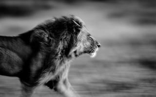 الصورة: أيقونة الحياة البرية