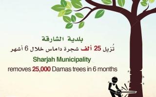 """الصورة: """"بلدية الشارقة"""" تُزيل 25 ألف شجرة داماس خلال النصف الأول من العام الجاري"""