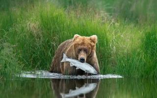 الصورة: الصور المرشحة لجائزة مصور الحياة البرية 2020