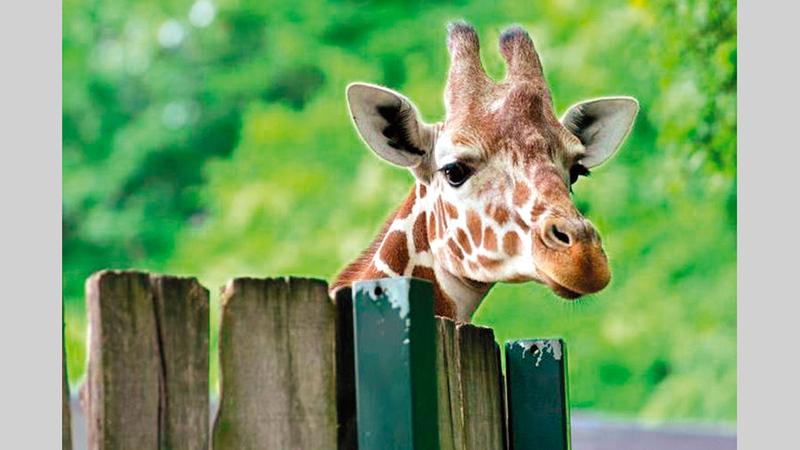 بين 1970 و2016، زال 68% من الحيوانات البرية. أرشيفية