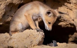 الصورة: بالصور.. لقطات طريفة من الحياة البرية حول العالم