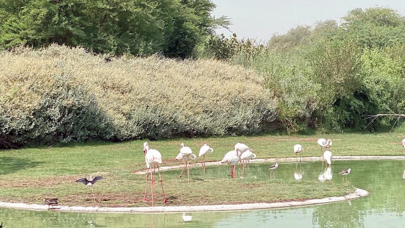 المنتسبات اطلعن على جهود ّ المحافظة على الحياة الطبيعية وحماية الأراضي الرطبة.  من المصدر