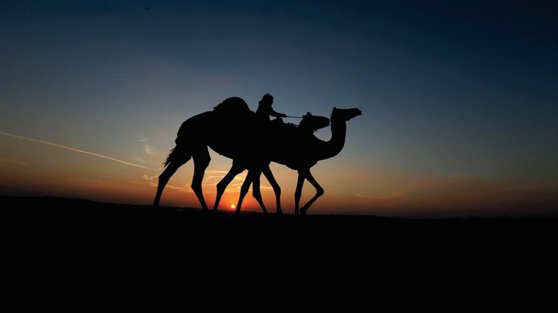 مزاينات الإبل والصقور وغيرها حاضرة في «المهرجان».من المصدر