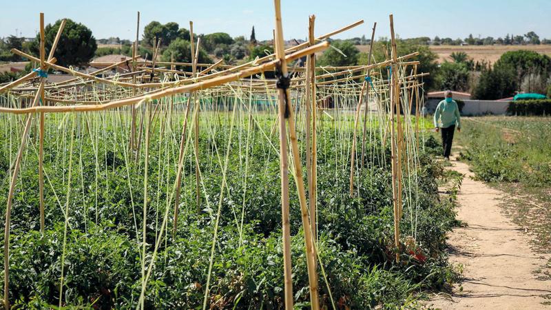 «الزهراء فروتاس» ينتجون خضراواتهم في مزارع خاصة بهم. من المصدر