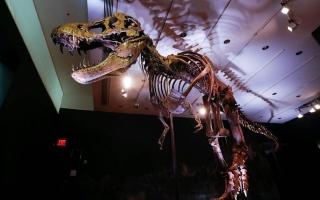 """الصورة: بالصور.. الهيكل العظمي الاكثر اكتمالا في العالم للديناصور """"ستانلي"""""""