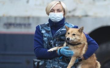 """الصورة: تدريب كلاب هجينة في روسيا على رصد الإصابات بـ""""كورونا"""""""