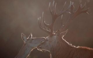 الصورة: بالصور.. لقطات من الحياة البرية حول العالم