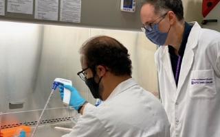 الصورة: باحثو جامعة نيويورك أبوظبي يتوصلون إلى وجود بروتين مسؤول عن تشوه الأنسجة الدهنية المسببة للأمراض