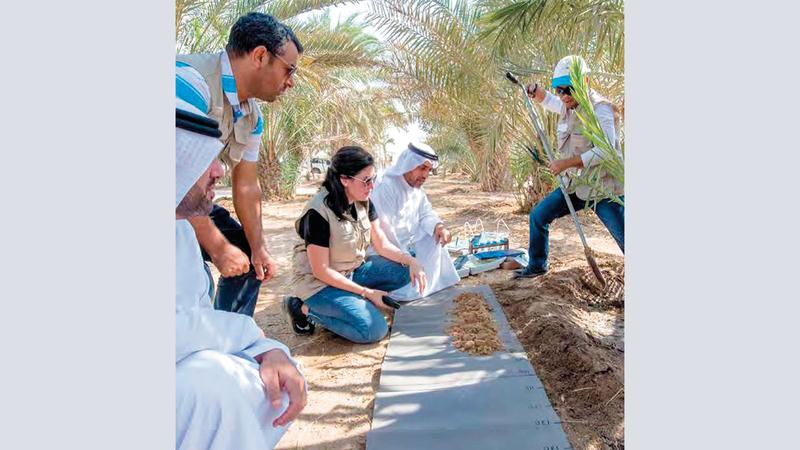 «الهيئة» تعمل على تجنب المزيد من الأراضي الزراعية المهجورة. من المصدر