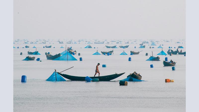 توحيد برفيز - بنغلاديش