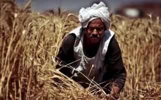 الصورة: مصر تهدف لزراعة 3.5 ملايين فدان بالقمح في الموسم الجديد