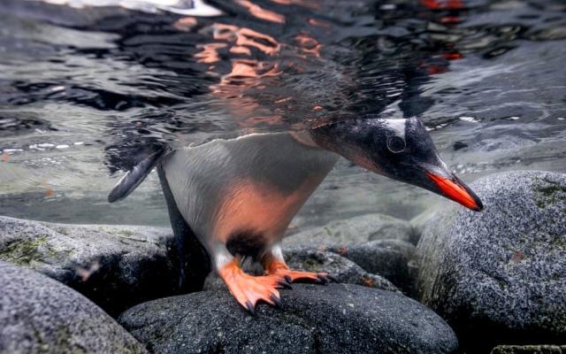 """الصورة: بالصور.. لقطات من الحياة البيئية في """"أنتاركتيكا"""" بالقطب الجنوبي"""