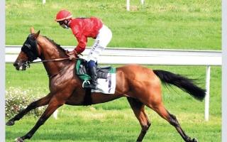الصورة: «كنغ مونلو» يتصدر ترشيحات كأس الوثبة للخيول في فرنسا