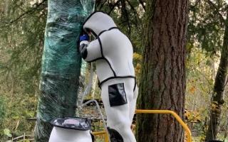 الصورة: علماء حشرات يقضون على أول عشّ لـ«الدبابير القاتلة» في الولايات المتحدة