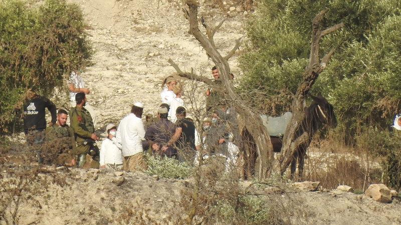 تكثيف اقتحام المستوطنين الأراضي في موسم الزيتون. الإمارات اليوم
