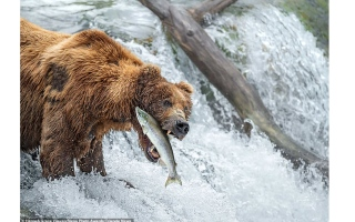 الصورة: بالصور: عالم الحيوان المذهل